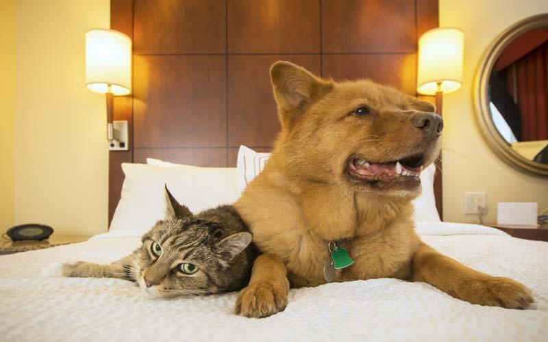 pet-friendly